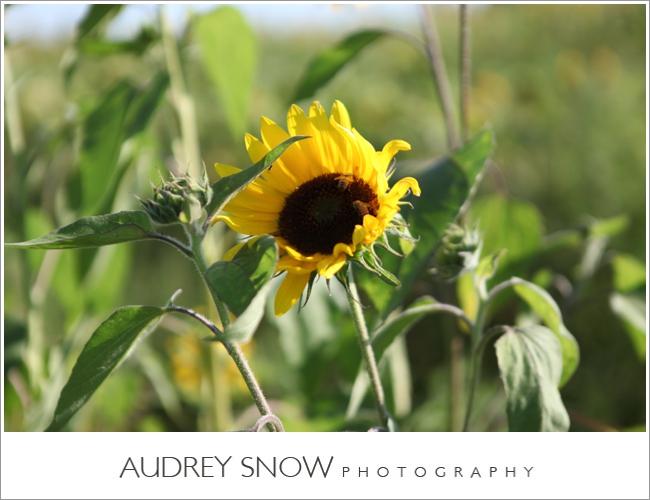 audreysnow-martha-clara-wedding-photography_1243.jpg