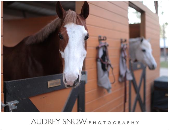 audreysnow-photography-naples-barn-wedding_1907.jpg