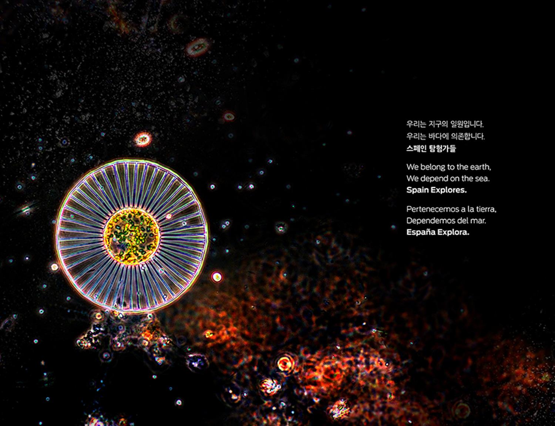 Gráfica de salida,  zooplancton encontrado por el Hespérides  a 5000 metros de profundidad.
