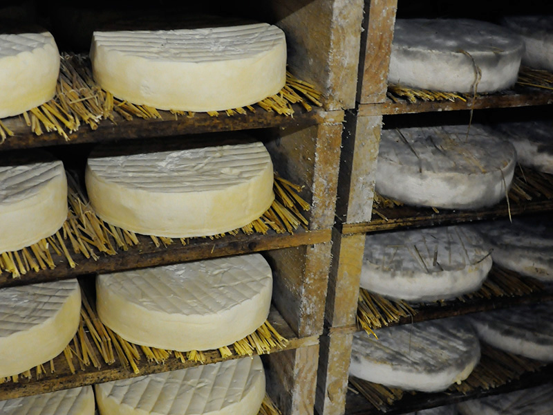 Young and old cheeses maturing in their maturing rooms.