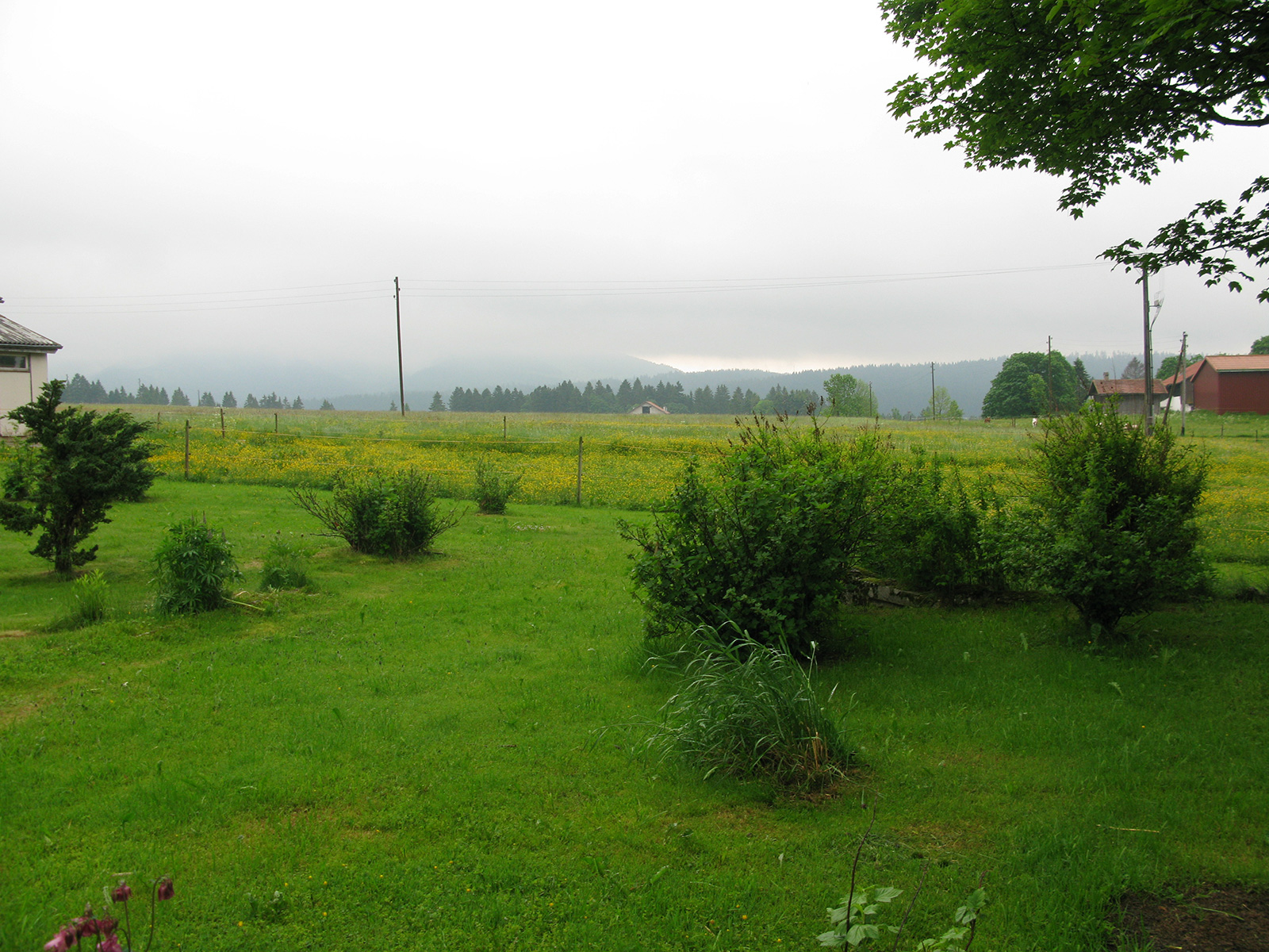 View from a mllk producer's farmhouse
