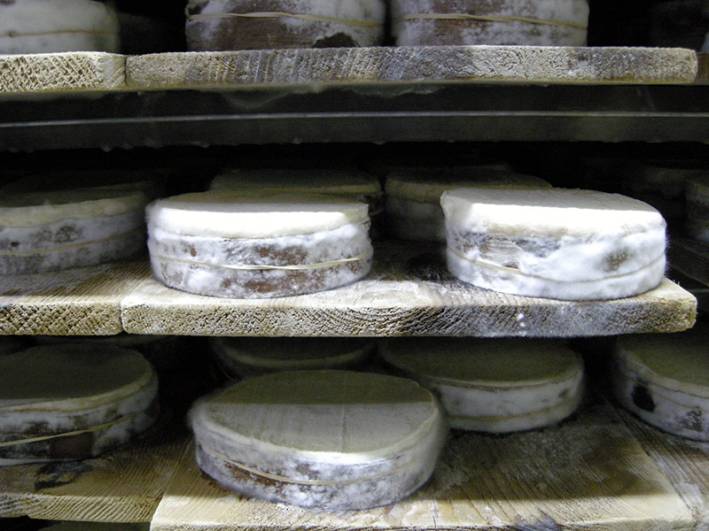 Cheeses mature on spruce boards