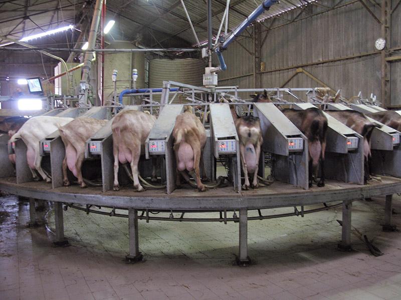 Round milking parlour