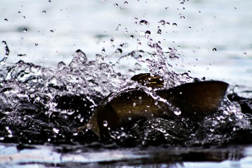 heavywatersmallie.jpg