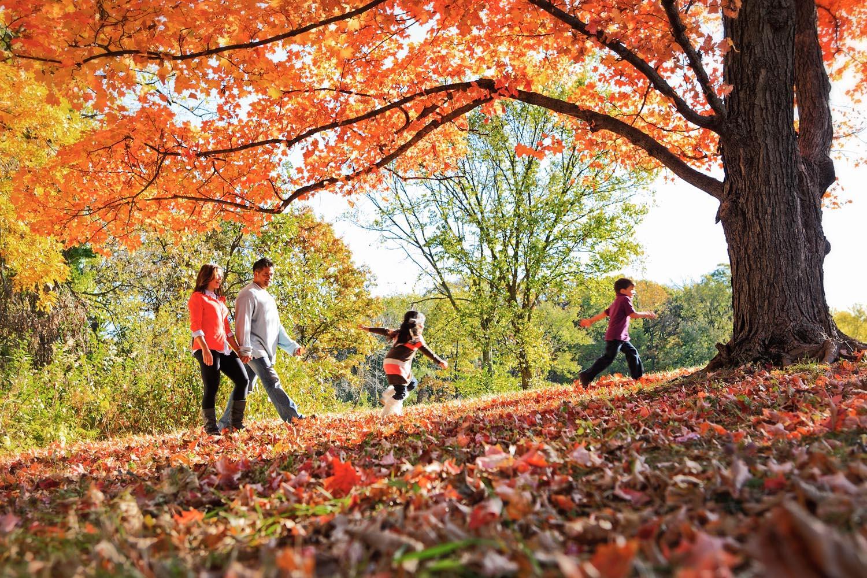 Walk in the Leaves.jpg