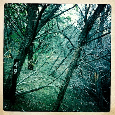 Scary (haunted??) autumnal woods. Actually taken on a walk yesterday (Dec 1): we get around to autumn rather late in Central Texas.