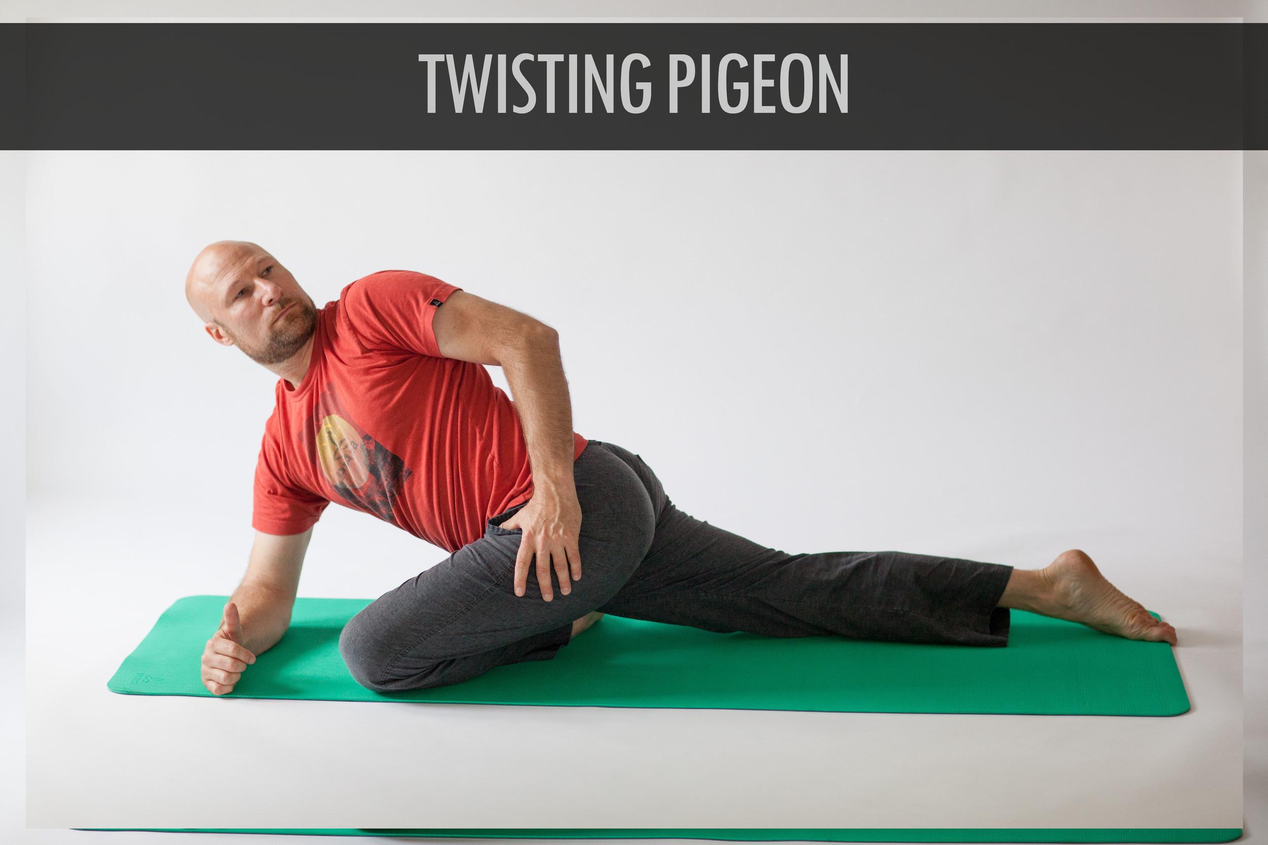 Twisting Pigeon.jpg