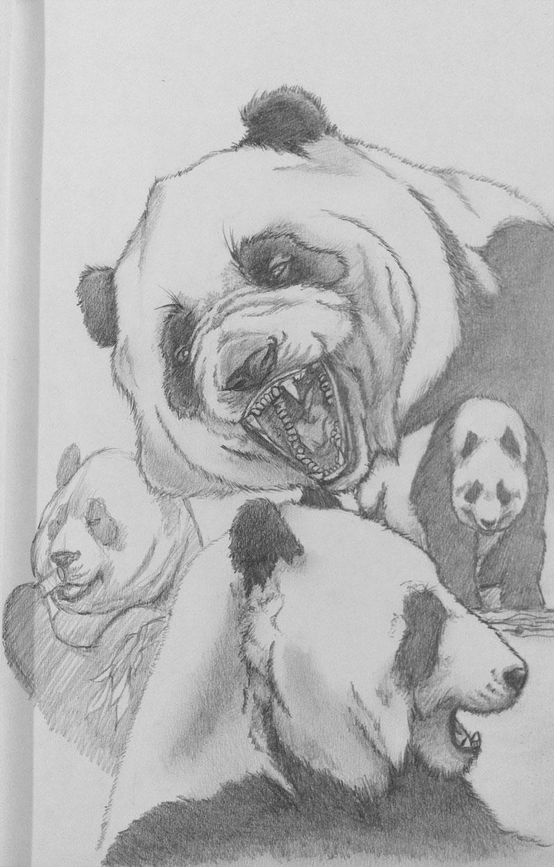 pandaSketch_01.jpg