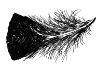 small feather.png