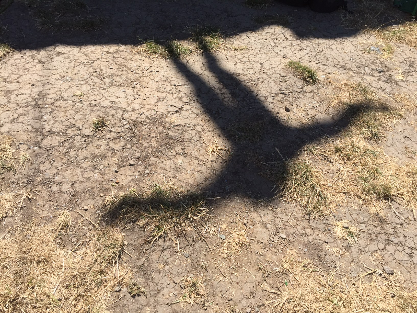 Child's Shadow.JPG
