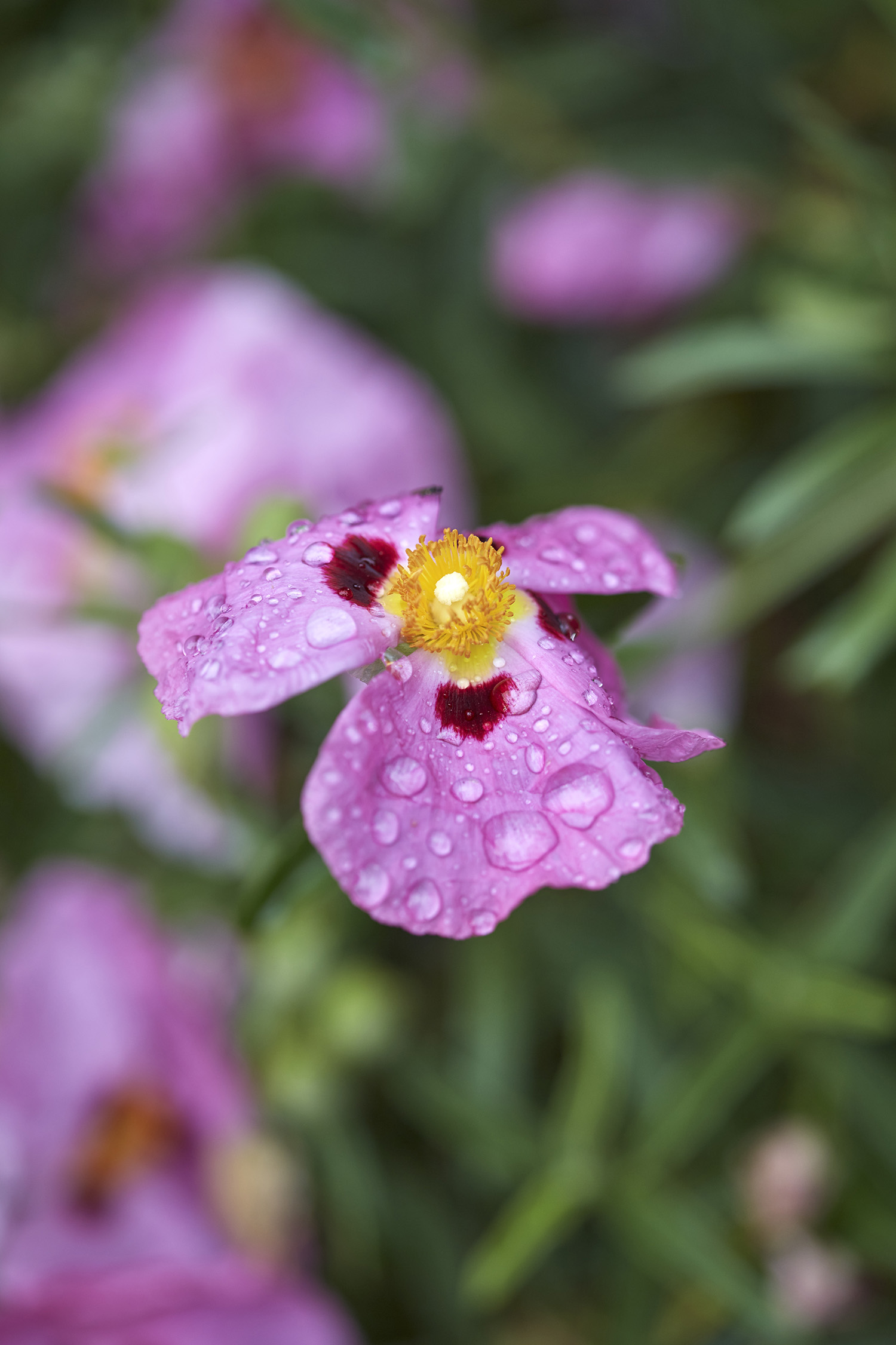 flower agrarian.jpg
