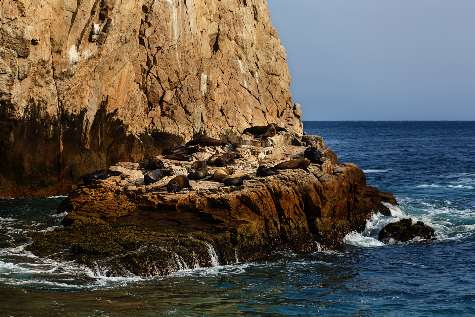 Sea lions taking a sun bath on a rock nearby El Arco in Cabo San Lucas