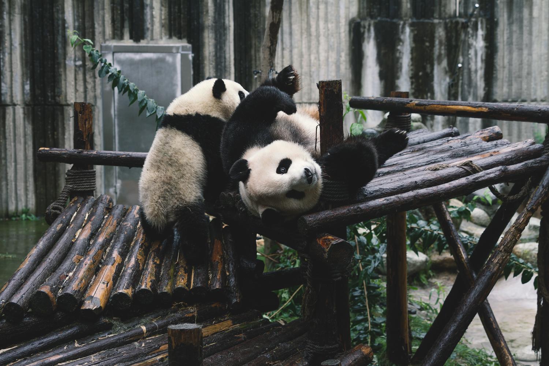 Panda Breeding Research Fasility