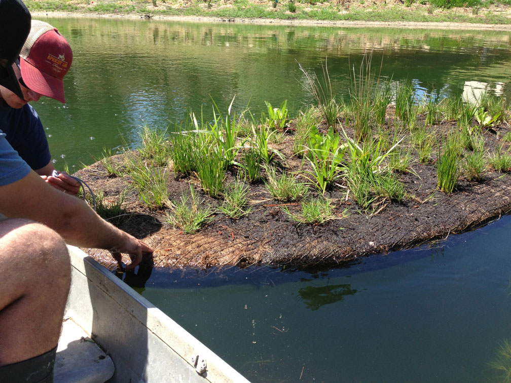 Launch of the Biohaven floating island. Wetland plant species grow happily in recycled plastic matrix and push roots into the water column to fix nitrogen, provide cover for small insects and animals, and cool the water temperature.