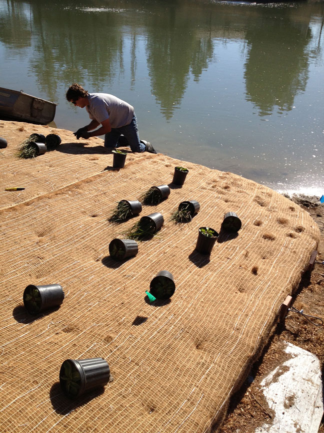 Biohaven Floating Islands prepped and planted. Plastic-free coir netting holds a thin layer of soil and plants in place.
