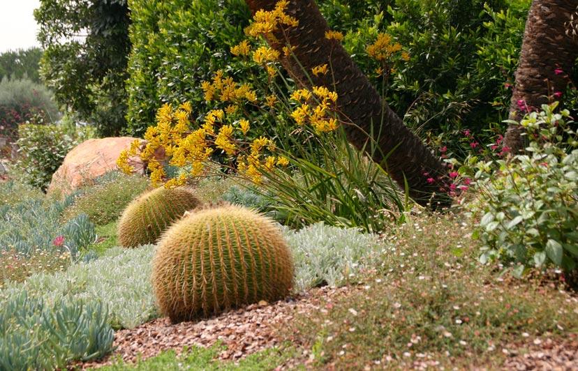 barrel_cactus.jpg