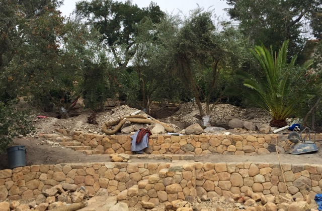 Retaining walls providing access to sloping garden on SB Riviera, olives just craned into place, planting on the way