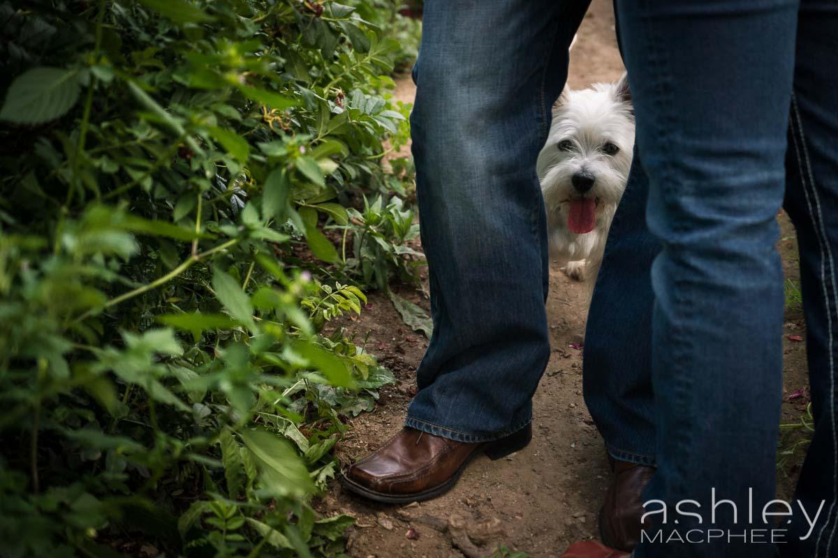 Ashley MacPhee Photography APhoto (2 of 11).jpg