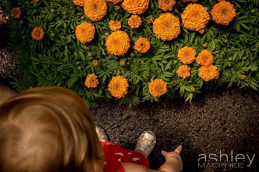 Ashley MacPhee Photography Atwater Market Family Portrait (15 of 17).jpg