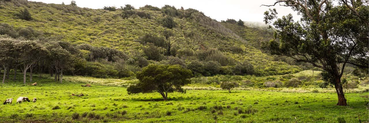 Maui Tropical Plantation Waikapu