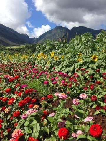 Kumu Farms at Maui Tropical Plantation