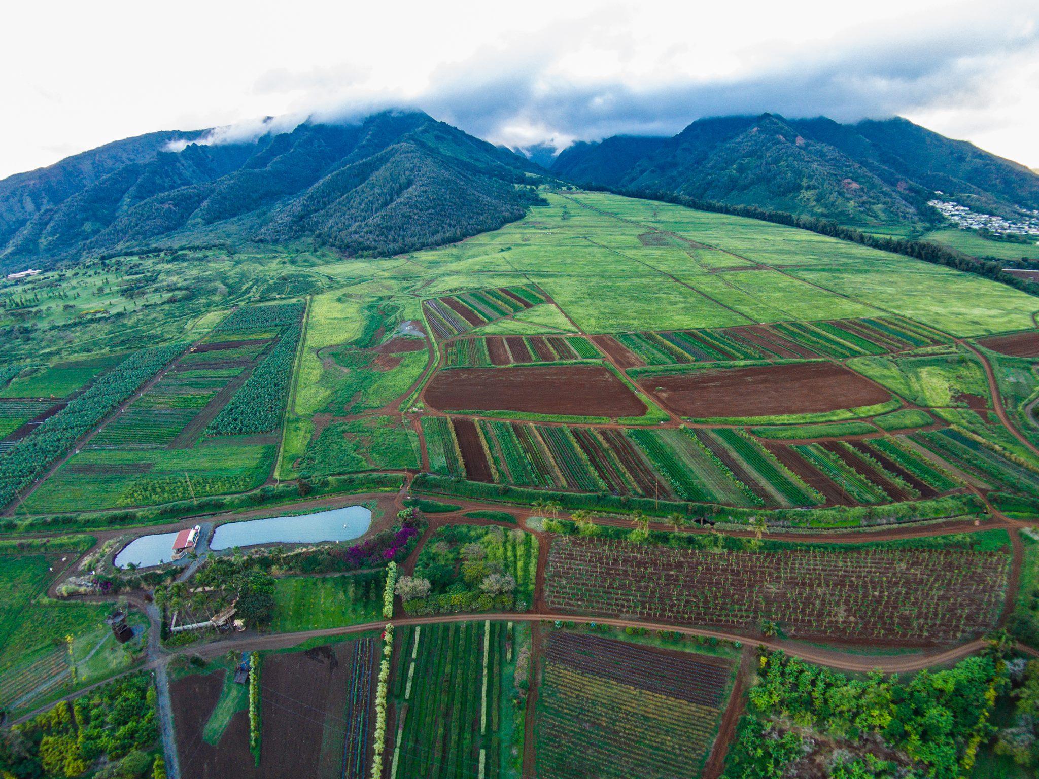 Maui Tropical Plantation Waikapu Mountainside