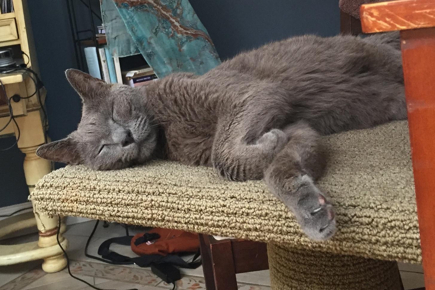 My beloved fourteen year old cat, Buddy.
