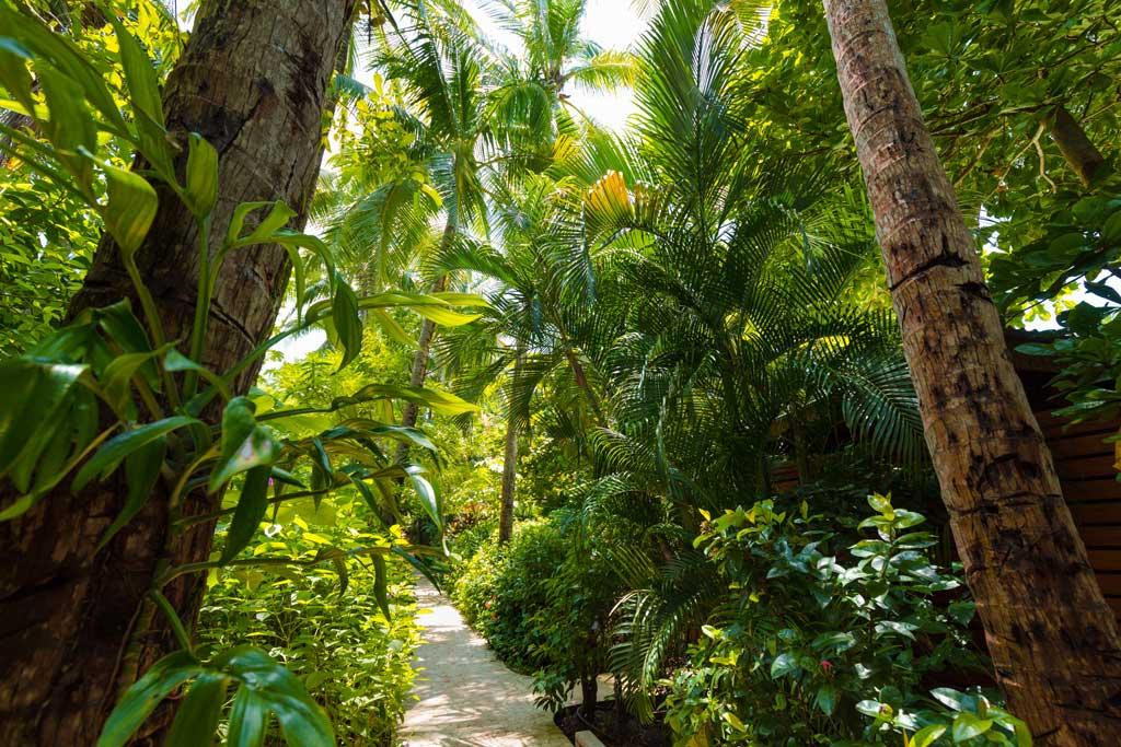 Our-garden-paths.jpg