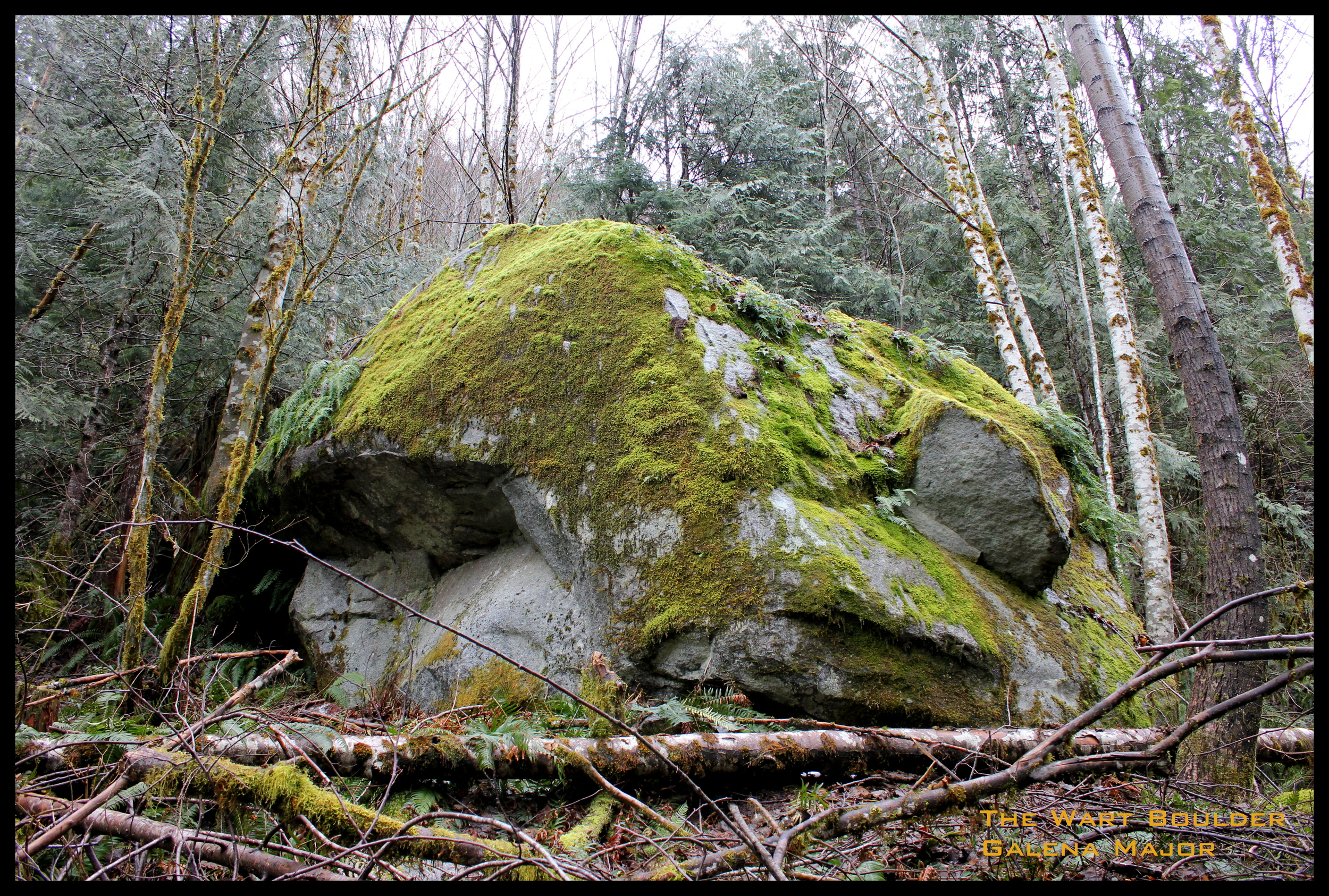 The Wart Boulder needing your attention ! No lines have been established on it. Just up hill from the Moth.