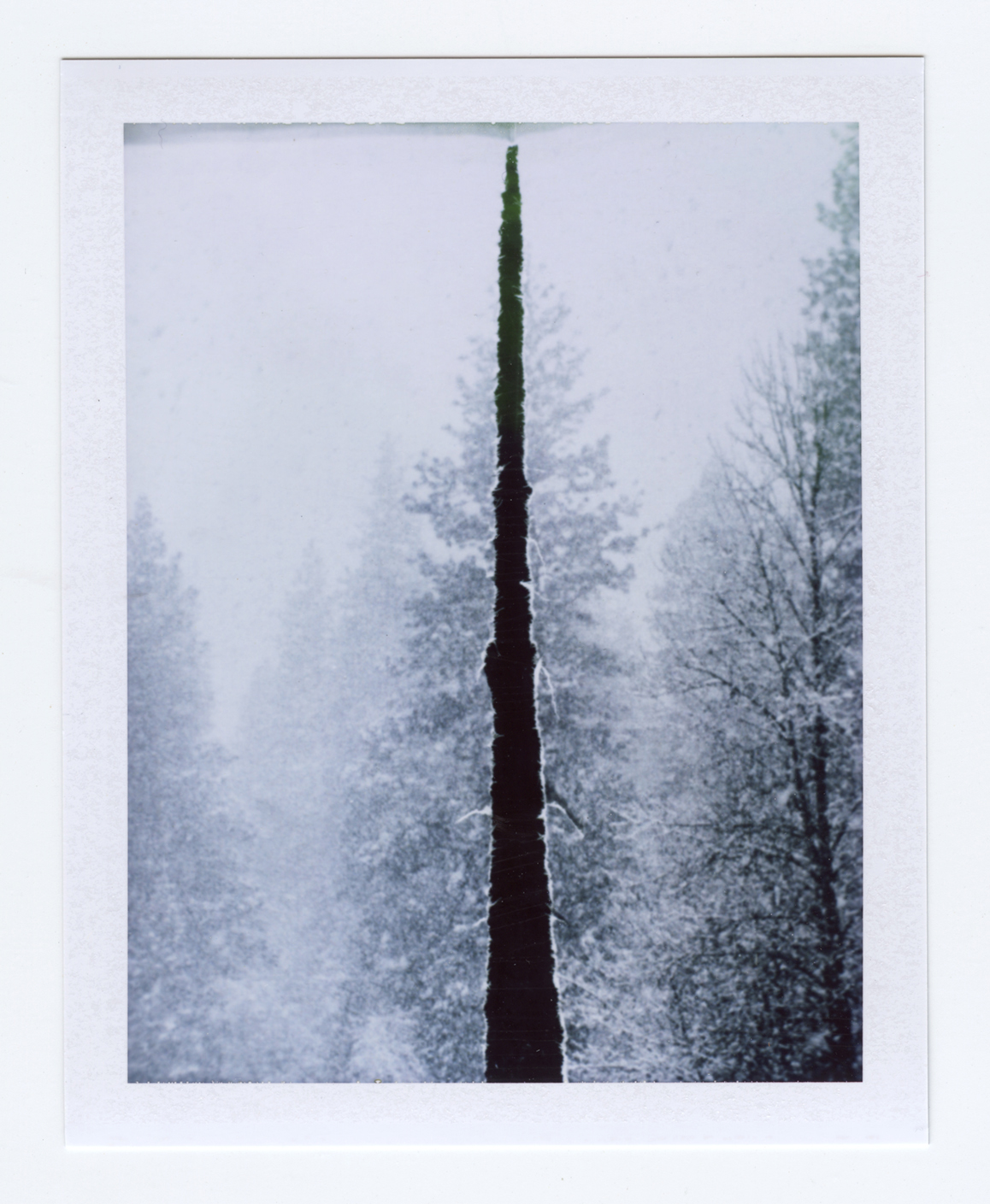 fractured (when a tree falls)  Polaroid of found National Geographic, 2015   Statement + Info