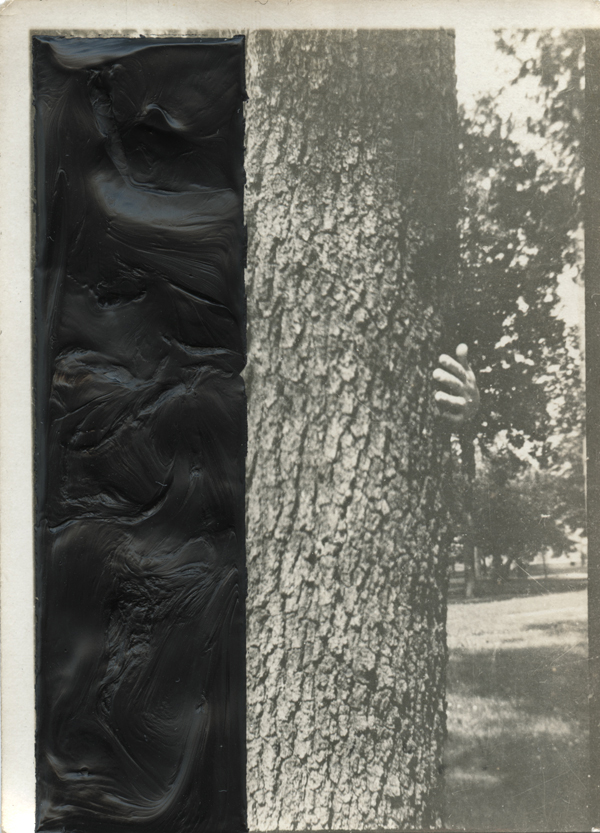peeling the bark away  found photograph and oil paint, 2012   Statement + Info