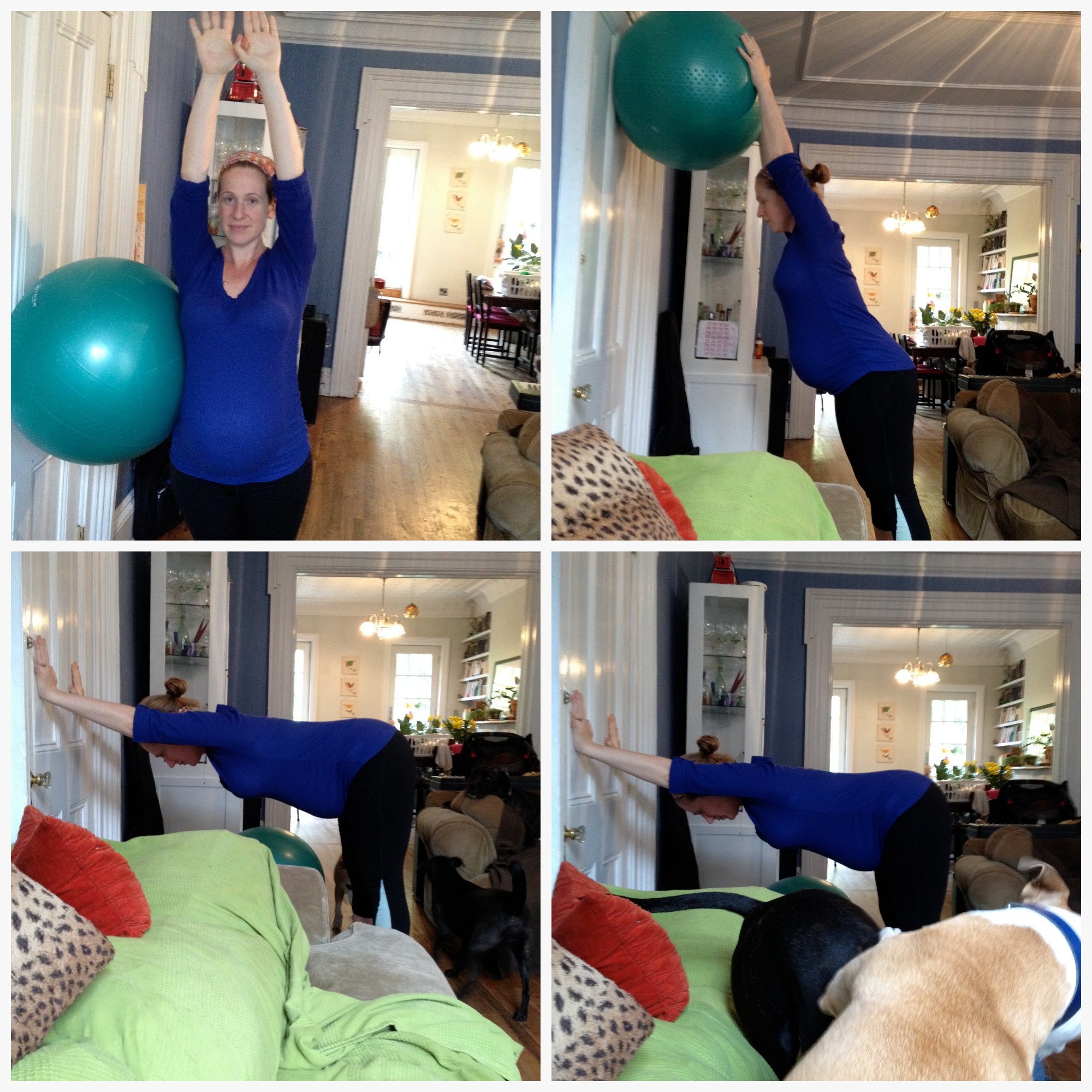 I like to use the ball to help stretch out my side body and my back. You can even do your stretches while your dogs play around you!     How to? Top left pic I stand tall and gently stretch over toward the wall. It's hard to get those side stretches in and this is a gentle way to do it. Top right pic I keep my hands on the ball and reach up through my fingers. I am NOT shrugging my shoulders, they are relaxed and down, but I am using my arms against the ball like this to lift upward focusing on the spine. Imagine in this position that gravity is lifting up through your spine instead of down. Breathe and enjoy this for a few deep breaths. The bottom two pics are really just a downward dog against the wall. Hands are flat against the wall, feet flat hip distance apart. I look to feel as if my tush is reaching out and my belly is lifted up. My shoulders are relaxed and my jaw is released. Breathe and enjoy this for a few deep breaths.