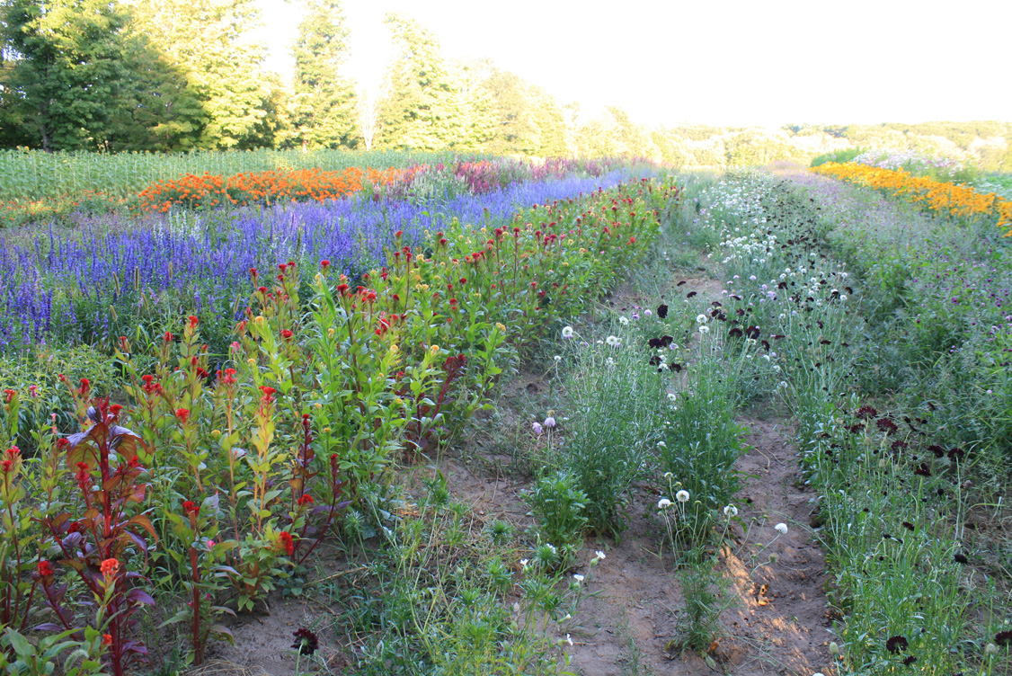 flower field, the food project, lincoln ma