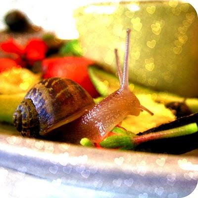 snail+11.jpg