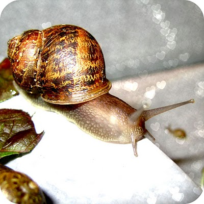 snail+7.jpg