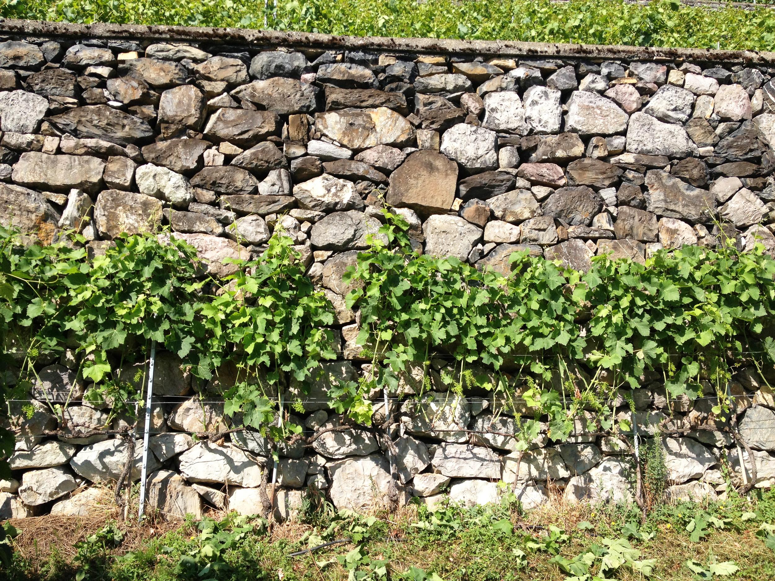Eine Rebmauer der Abbaye de Salaz, gebaut vom Winzer Franz Huber in den 80er-Jahren.