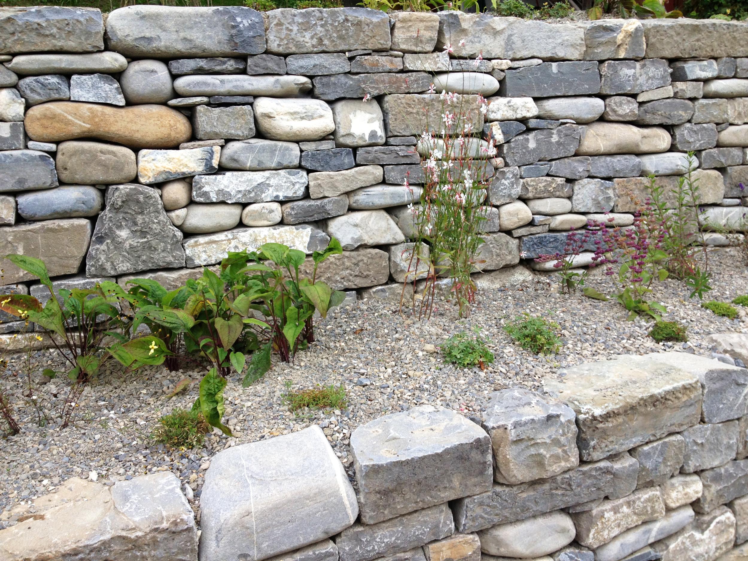 Die Staudenbepflanzung mit Blumen, Kräutern und Gräsern gleich nach Bauende. Der feine Kies dient als Mulchschicht zur Unterdrückung von auflaufenden Unkräutern.