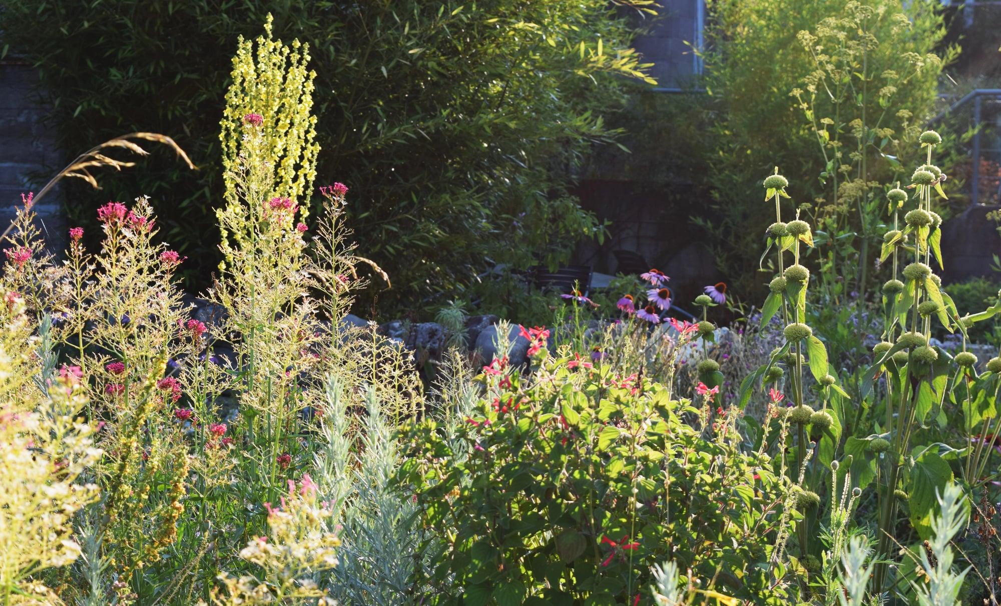 Sommergarten_1_15jpg.jpg