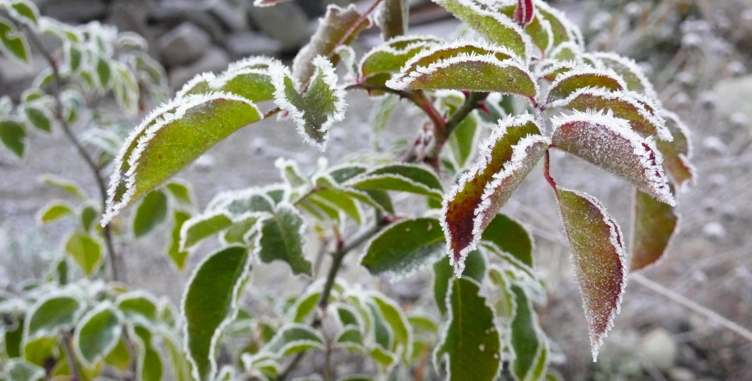 Winter_Aspekt_7_berabeitet.jpg