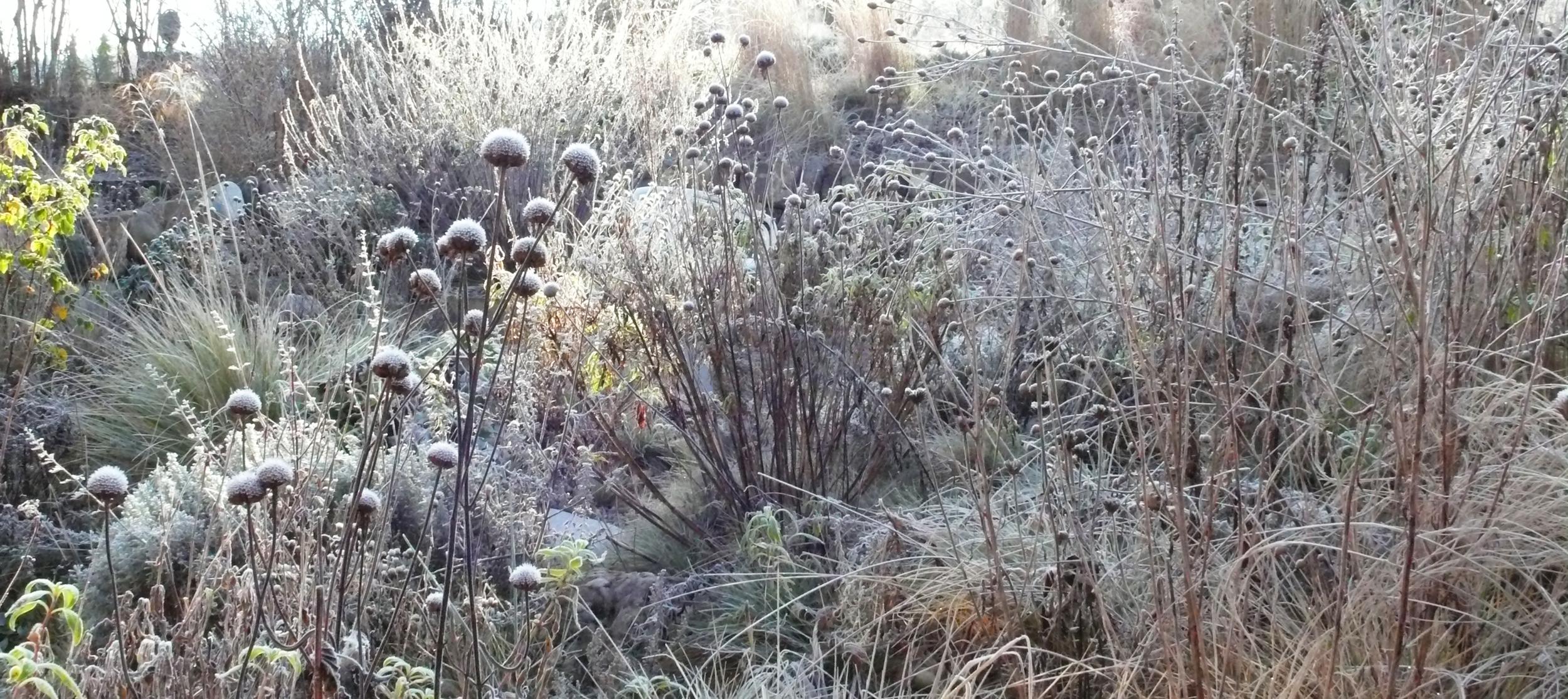 Winter_Aspekt_6_bearbeitet.jpg