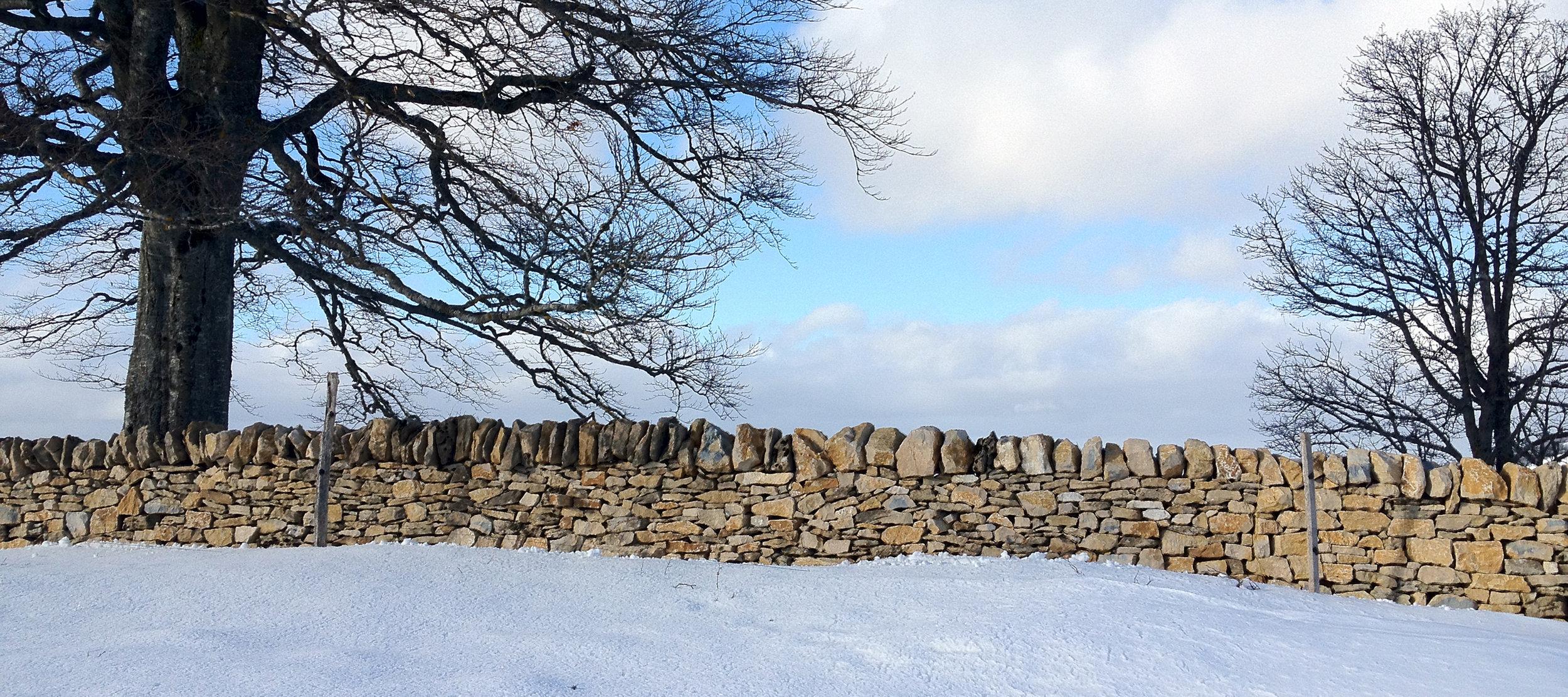 Trockenmauer auf dem Probstenberg - ein Projekt des Naturpark Thal, der Stiftung Umwelteinsatz und Felsenfalter