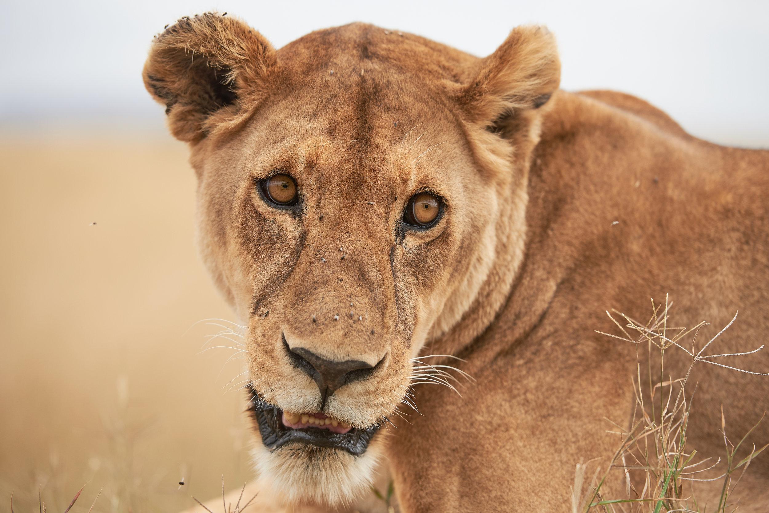 2017_WA_KI_Serengeti_1263.jpg