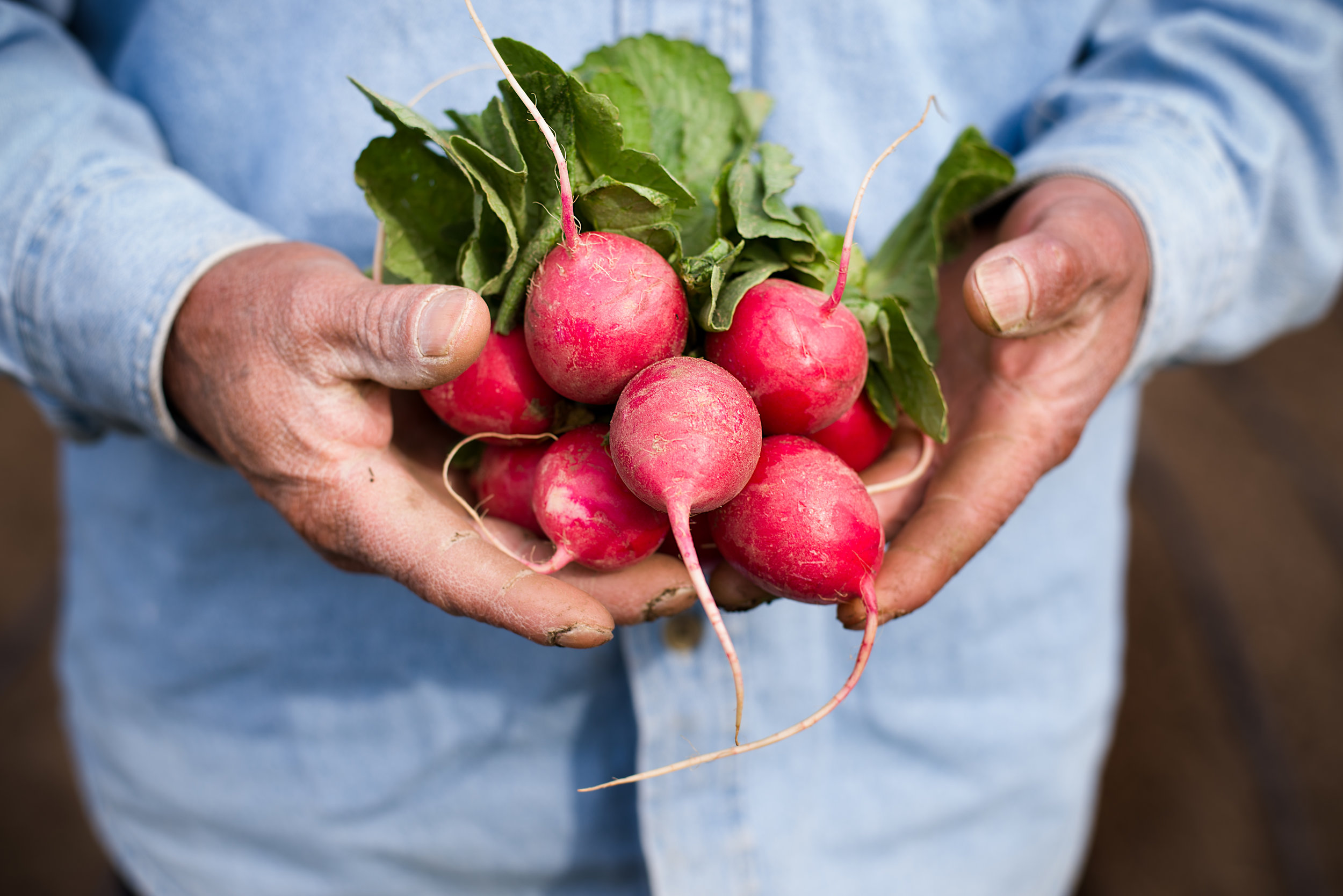 Latino man holding radishes from Re:Farm backyard garden in his hands.jpeg