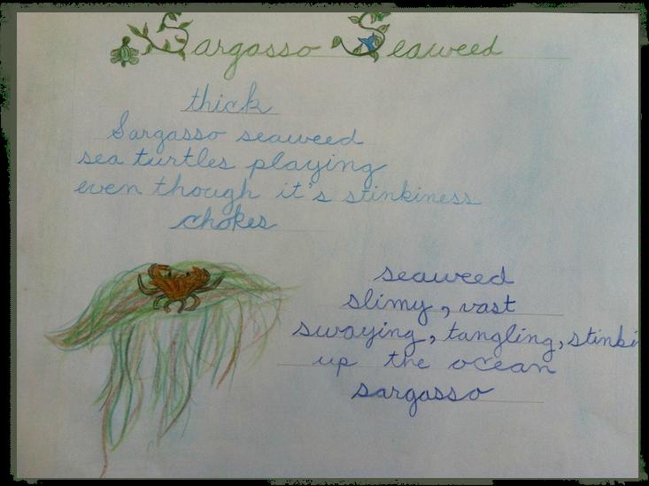 sargasso seaweed frame.png