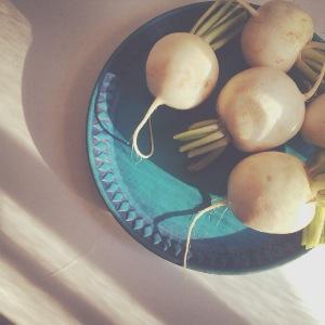 DP turnip roots.jpg