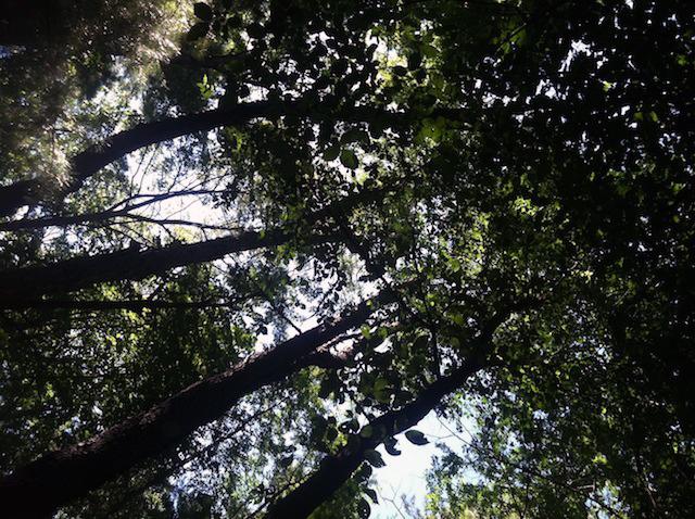 Running in the Pine Bush.