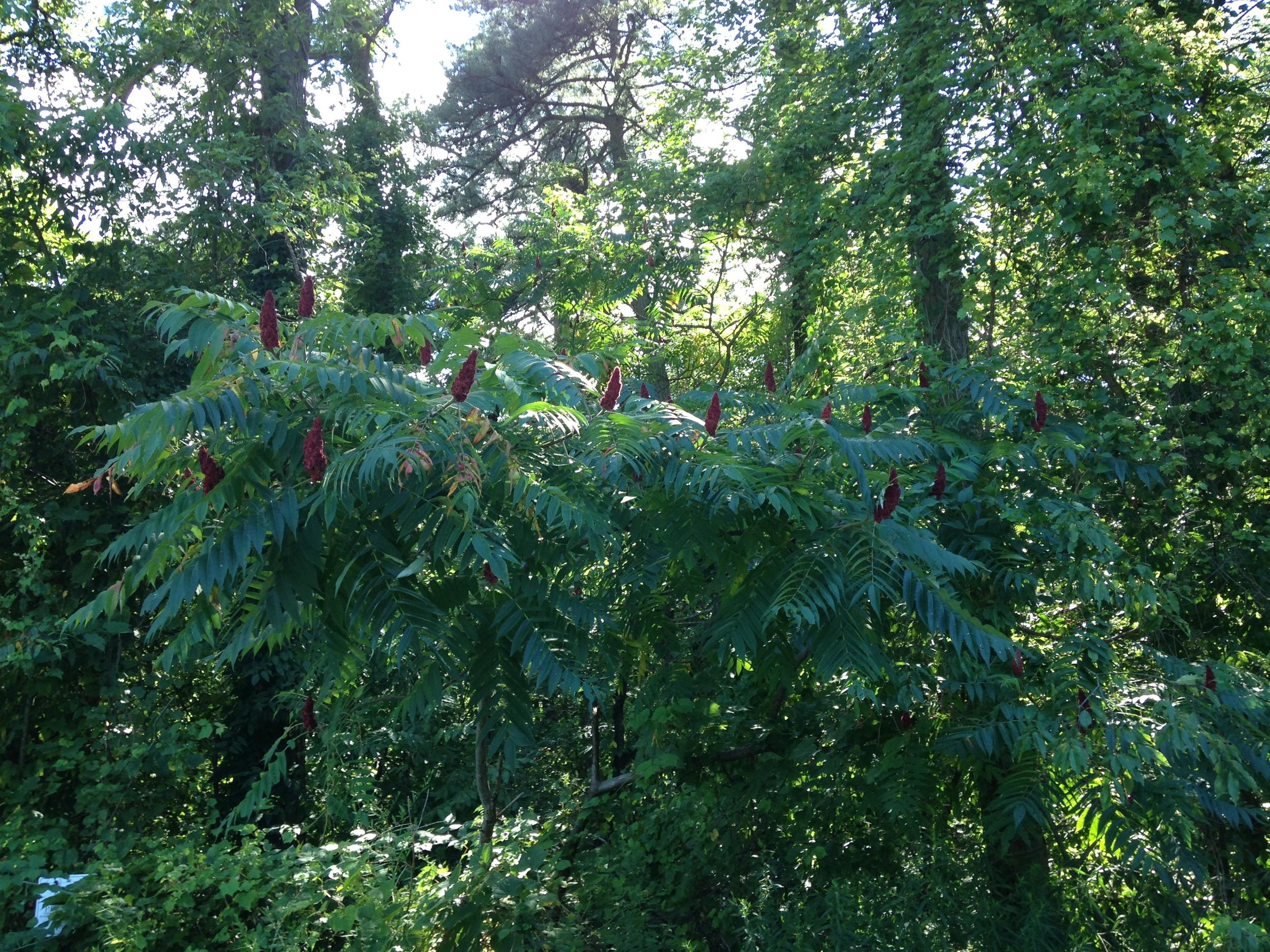 Ran a 5K in the Pine Bush.
