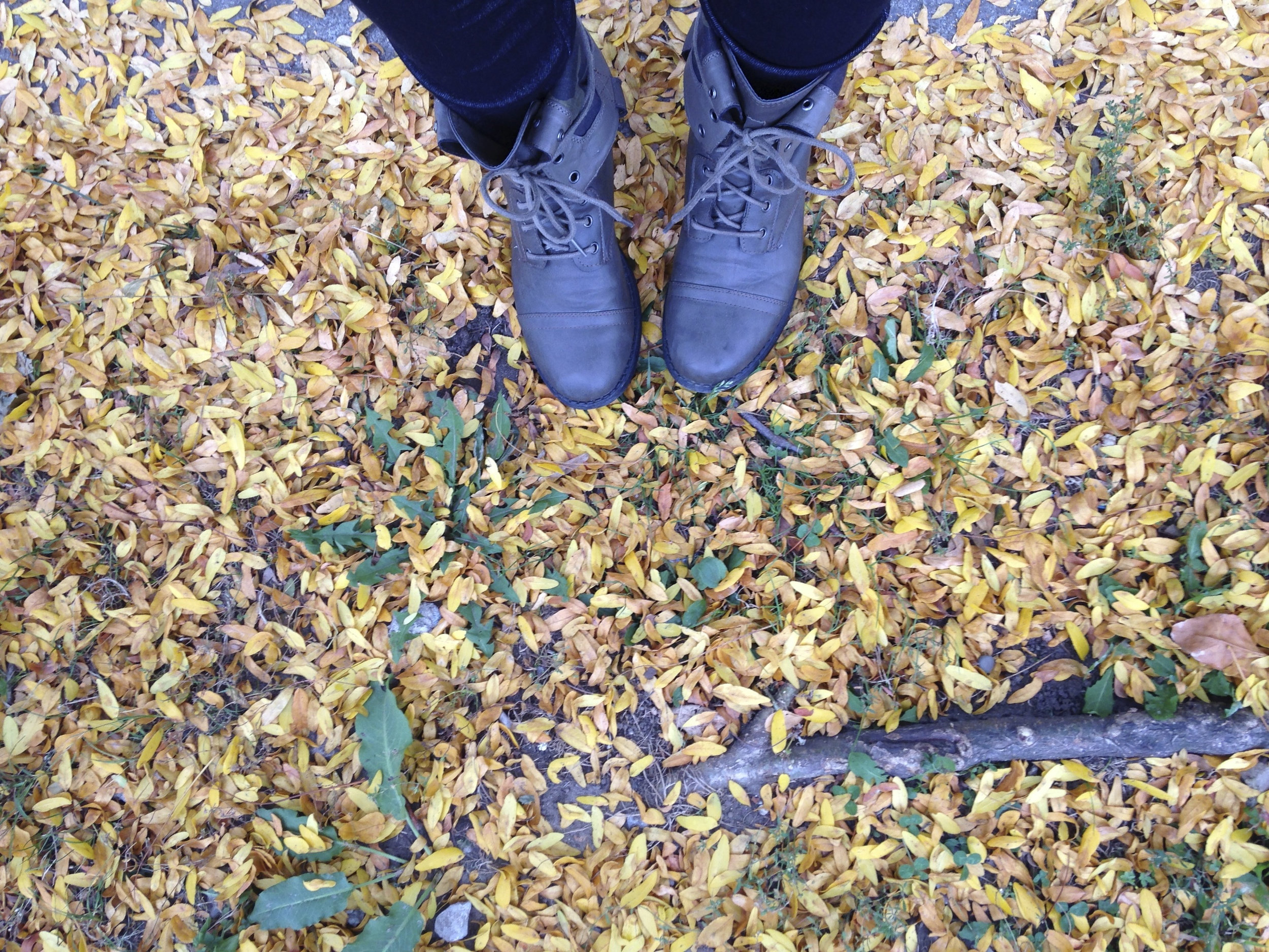 I have at least 10 photos of my shoes and leaves on my phone. Future coffee table book.
