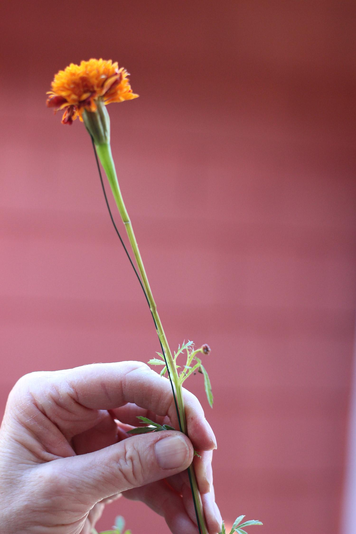 Bring wire down past bend, then wrap around stem.
