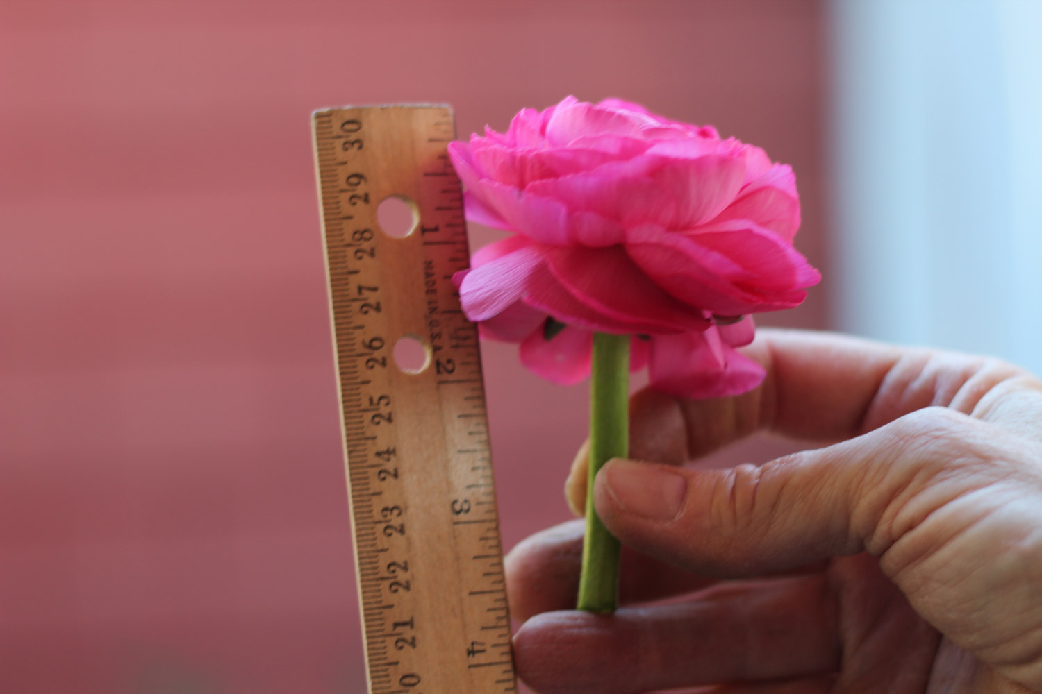 Vary the lengths. Blooms should be4 - 5 inches.